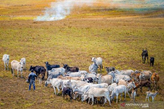 Peternakan leluhur di Lembah Lore