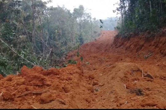 Walhi Kalbar sebut penebangan hutan di Tayan diduga ilegal