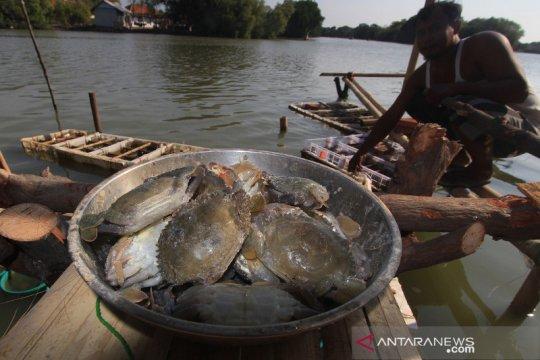 Pebisnis ekspor perikanan ingin regulasi terkait kepiting dikaji ulang