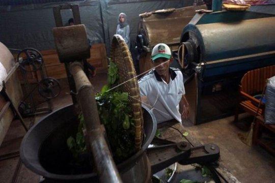 Produksi teh organik Page 1 Small
