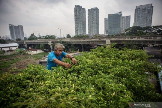 Cara Jakarta memenuhi kebutuhan sayuran