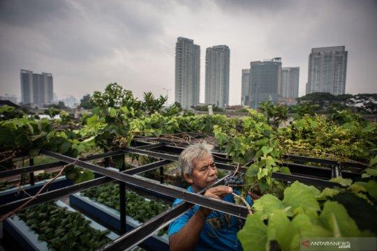 LIPI: Pertanian urban bisa jadi solusi masalah pangan semasa pandemi
