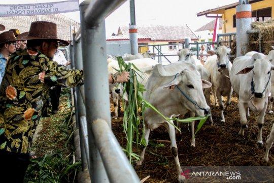 Kementan dorong koperasi di Subang jadi percontohan korporasi peternak