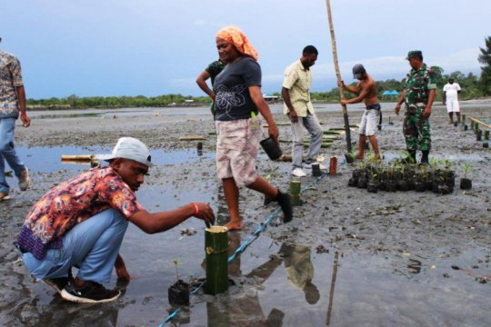 TNI-Polri tanam ratusan bibit pohon bakau di Waropen