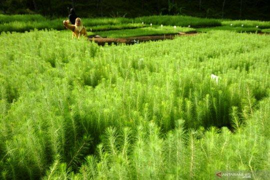 Menjaga dan memelihara hutan dengan pemanfaatan berkelanjutan