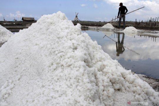 PT Garam ingin petani produsen garam bangkit dari keterpurukan