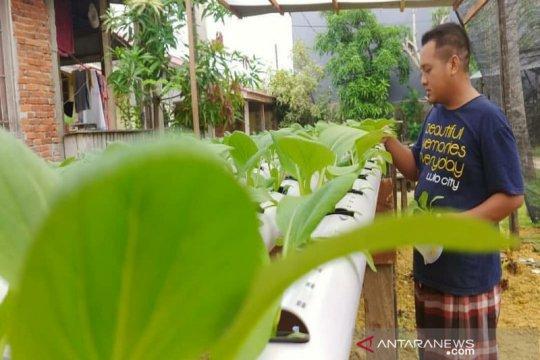 Petani Kota Kendari mampu produksi sayur hidroponik