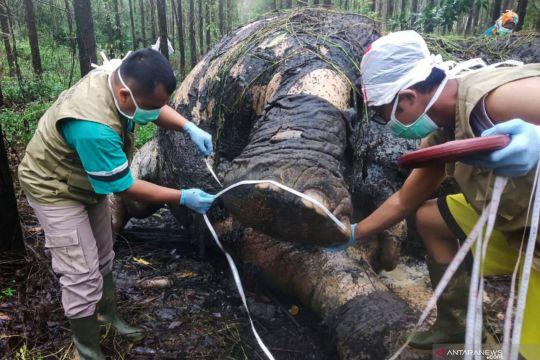 KLHK kesulitan ungkap kasus pembunuhan gajah Sumatera di Riau
