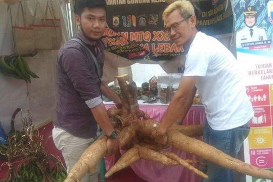 Singkong raksasa jadi primadona pengunjung pameran di Lebak