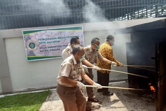 Karantina Pertanian Padang musnahkan komoditas ilegal