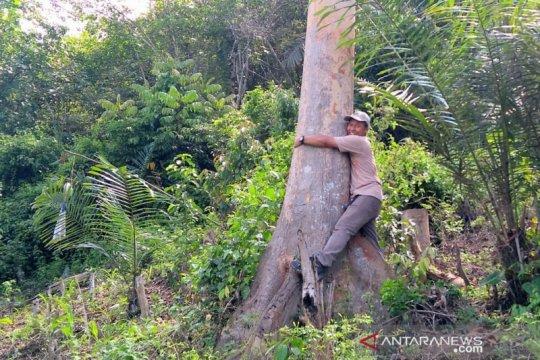 Warga rayakan Festival Peluk Pohon di Gorontalo