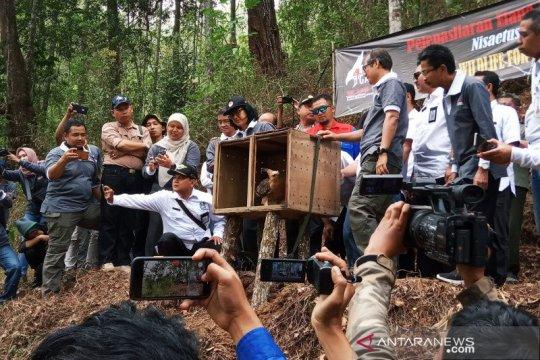 Menurun drastis populasi elang Jawa di Gunung Ijen, sebut BKSDA