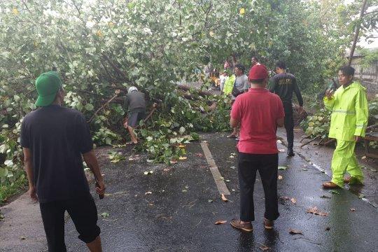 Delapan pohon tumbang akibat angin kencang di Mataram