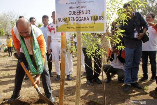Dinas NTT terbitkan izin investor Dubai produksikan cendana di Timor