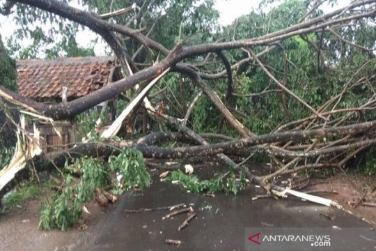 Hujan angin terjang Rangkasbitung, puluhan pohon roboh