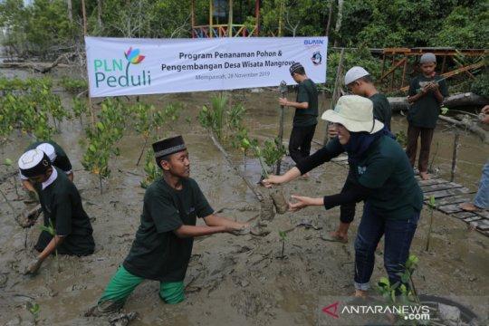 PLN tanam 5000 mangrove dan 1000 pohon produktif di Mempawah