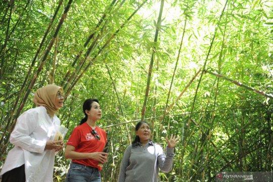 CIMB Niaga dan Yayasan KEHATI dorong masyarakat lestarikan bambu