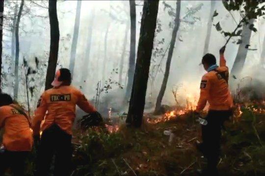 4 hari Gunung Lawu masih terbakar