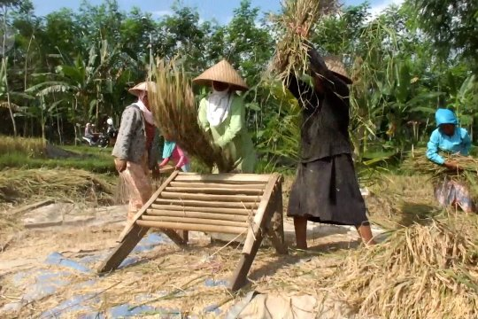 Kadin ingatkan pentingnya tingkatkan produktivitas pertanian dan pangan