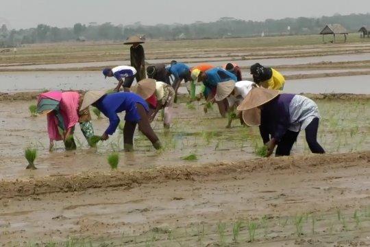 Pemkab Pandeglang dorong petani manfaatkan program asuransi tani