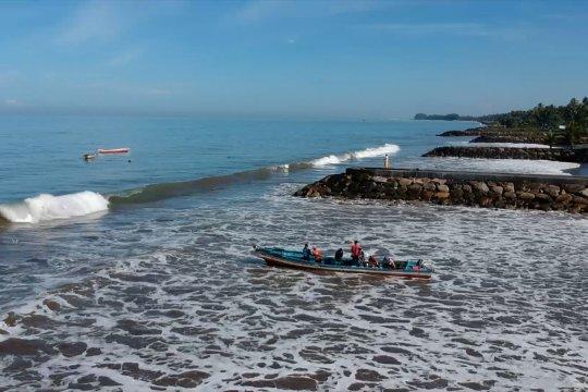 Pohon Pinago untuk pemulihan abrasi pantai