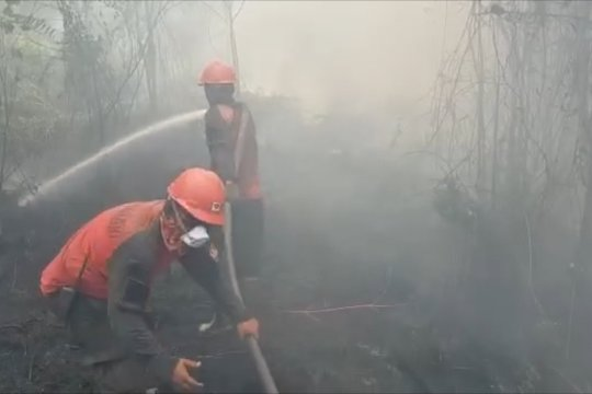 Faktor penting penyebab kebakaran hutan dan lahan