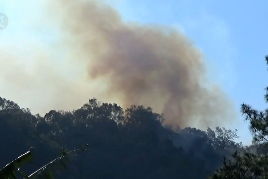 Hutan Gunung Argo Tengah terbakar