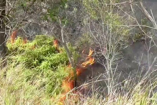 Kawasan rehabilitasi hutan Kota Sorong terbakar