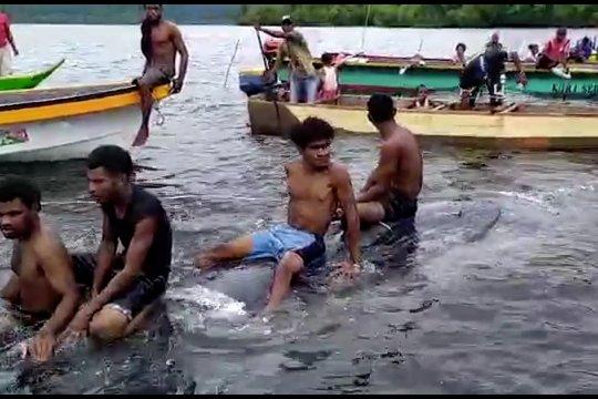 Seekor ikan paus terdampar di Kepulauan Yapen