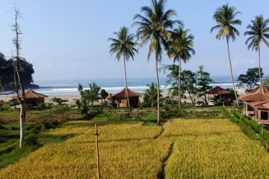 Harga gabah di Lampung pada November naik