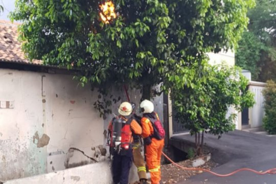 TLR Kota Tangerang terima 17 laporan warga terkait sarang tawon
