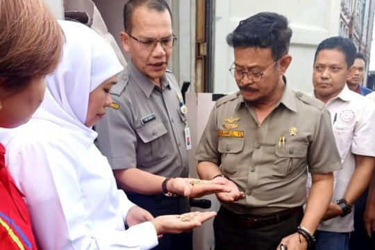 Ekspor produk pertanian lewat Karantina Pertanian Surabaya meningkat