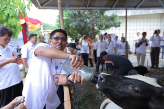Jaktim libatkan peternak sapi jadi rintisan Ekowisata Cipayung