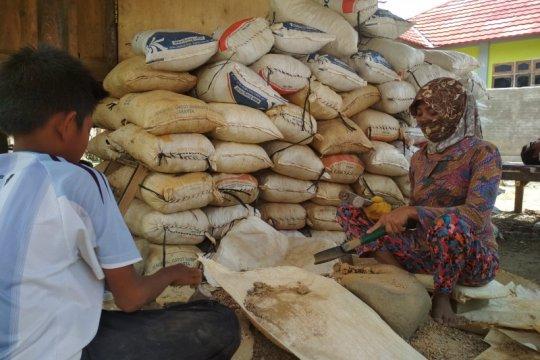 Miliaran rupiah perputaran uang di penambangan liar Sumbawa Barat
