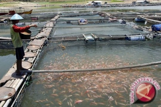 Produksi perikanan budidaya air tawar Bantul mencapai 11.500 ton