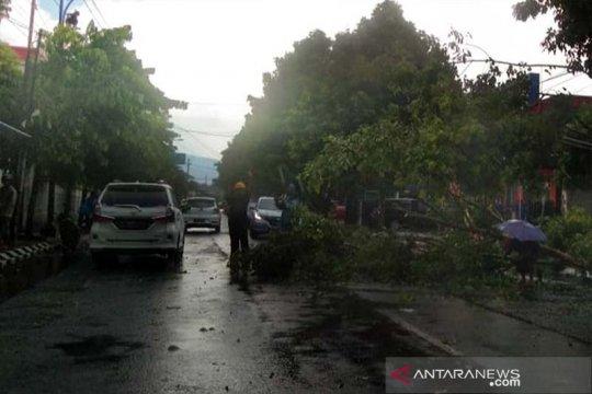 BPBD Banyumas: Belasan pohon tumbang saat hujan disertai angin kencang