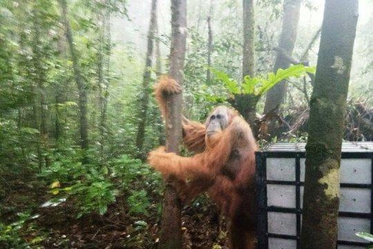 Aktivis lingkungan sarankan pengelolaan berkelanjutan APL Batang Toru