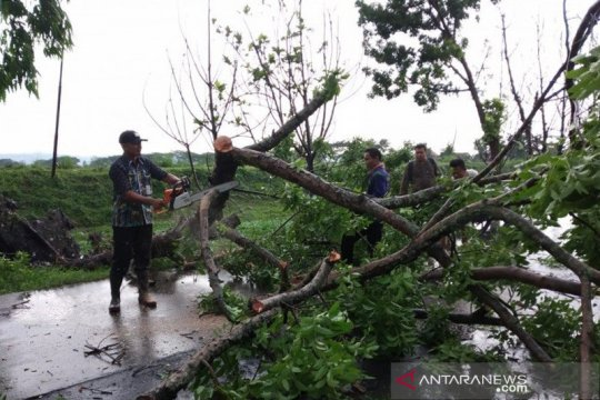 Puluhan pohon di Kudus tumbang akibat angin kencang