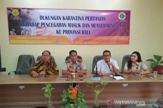 Karantina Denpasar perketat pengawasan cegah Flu Babi Afrika