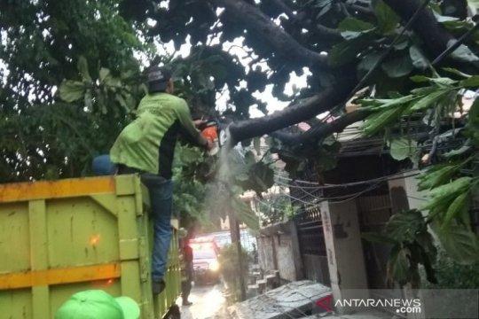 Warga Kebon Jeruk padamkan kabel udara terbakar akibat pohon tumbang