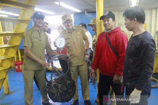 Ekspor ikan kerapu dari Belitung ke Hong Kong capai 90 ton