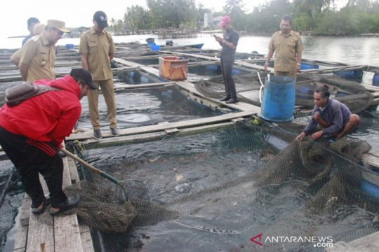 Belitung tahan sementara ekspor ikan kerapu ke pasar dunia