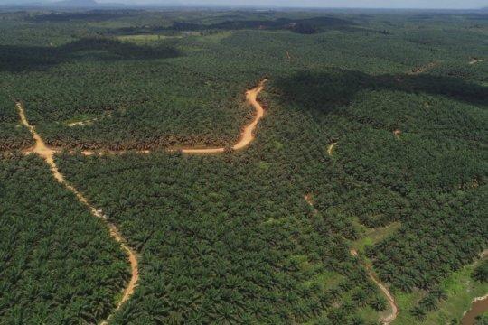 Kemarin, dana bagi hasil kelapa sawit hingga perluas QRIS