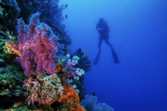 Berlomba mengulik bawah laut Maratua