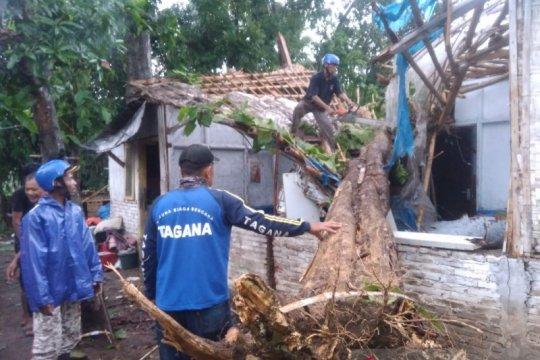 Angin kencang di Jember sebabkan pohon menimpa rumah dan mobil