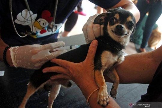 Stok vaksin rabies di Rejang Lebong cukup untuk setahun