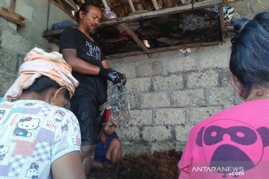 Petani Nusa Penida-Bali kembali semangat budidayakan rumput laut