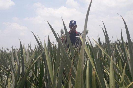 PT GGP dukung peningkatan ekspor komoditas pertanian Lampung