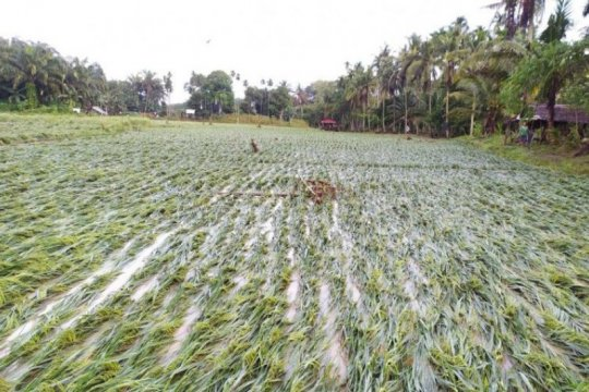 30 hektare padi dan jagung terdampak banjir di Langkat