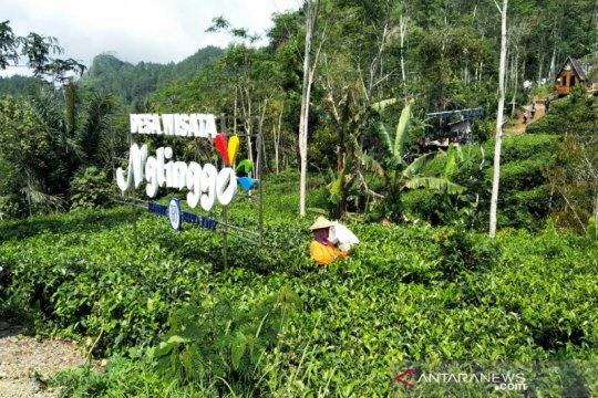 Kemenparekraf diharapkan bantu bangun jalur wisata Plono-Nglinggo